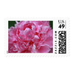 Pink Peony Stamp