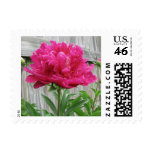 Pink Peony Stamps