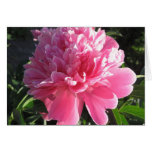 Pink Peony Stationery Note Card