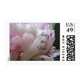 Pink Peony Wedding Invitation Postage Stamps