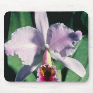 Pink Perci-Valiana (Cattleya) flowers Mouse Pad
