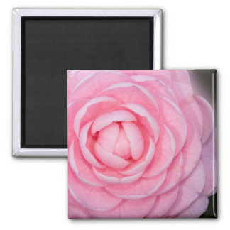 Pink Perfection Camellia Magnet