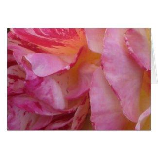 Pink Petal Flutter Rose Greeting or Note Cards