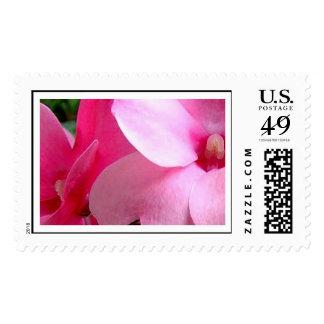 Pink Petal Stamps