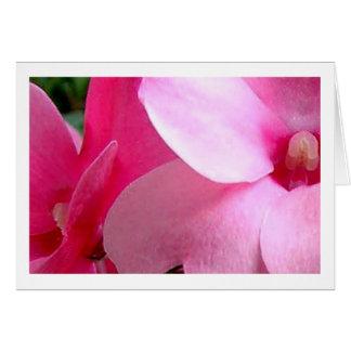 Pink Petals Cards
