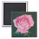 Pink Petals Magnet