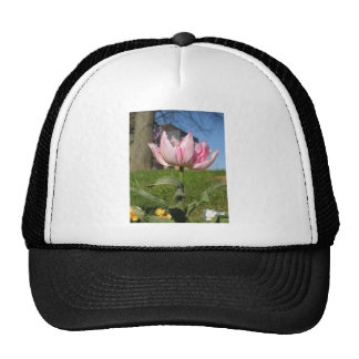 Pink Petals Tulip Mesh Hat