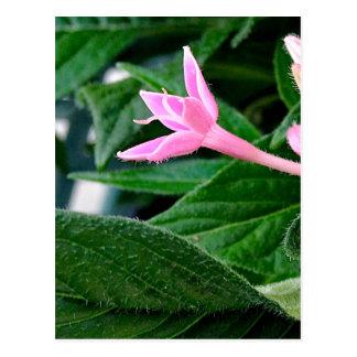 Pink Petunia and Leaf Postcard