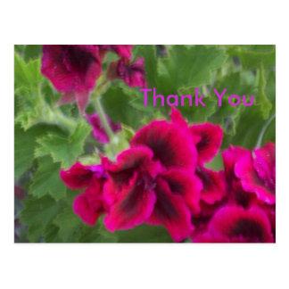 Pink Petunia Thankyou Postcard