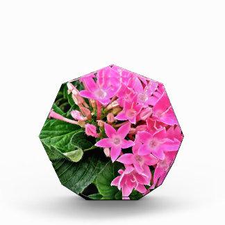 Pink Petunia's Award