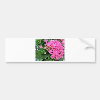 Pink Petunia's Bumper Sticker