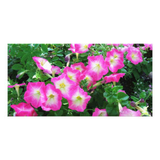Pink Petunias Photo Greeting Card