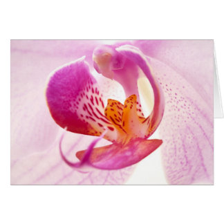 Pink phalaenopsis card