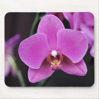 Pink Phalaenopsis Mouse Pad
