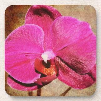 Pink Phalaenopsis Orchid coaster set