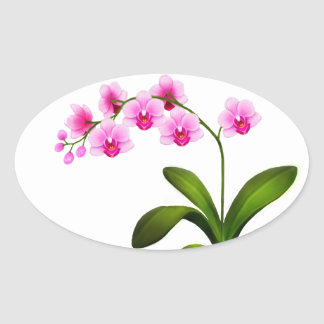 Pink Phalaenopsis Orchid Flowers Stickers