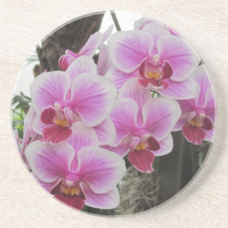 Pink Phalaenopsis Orchids Coaster