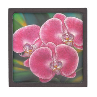 Pink Phalaenopsis Orchids Flowers Acrylic Painting Gift Box