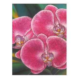 Pink Phalaenopsis Orchids Flowers Acrylic Painting Postcard