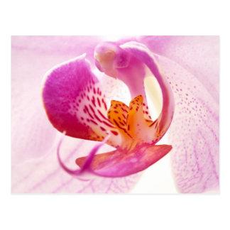 Pink phalaenopsis postcard