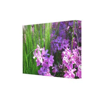 Pink Phlox and Grass Summer Flowers Canvas Print