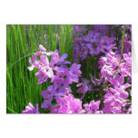 Pink Phlox and Grass Summer Flowers Card