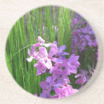 Pink Phlox and Grass Summer Flowers Drink Coaster