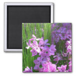 Pink Phlox and Grass Summer Flowers Magnet