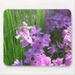 Pink Phlox and Grass Summer Flowers Mouse Pad