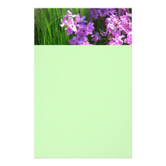 Pink Phlox and Grass Summer Flowers Stationery
