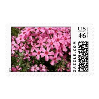 Pink Phlox Stamp
