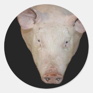 Pink pig head against black background round sticker