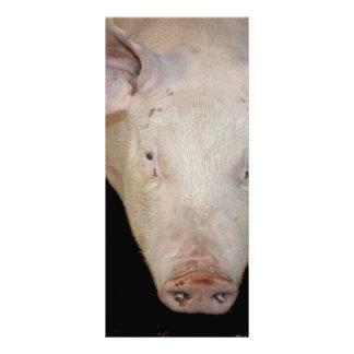 Pink pig head against black background custom rack cards