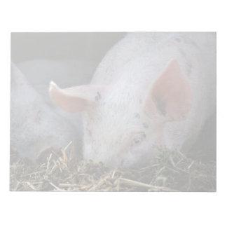 Pink pig photo notepad