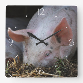 Pink pig photo square wall clocks