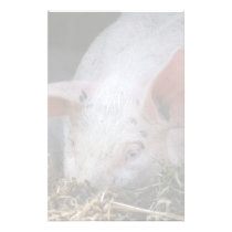 Pink pig photo stationery