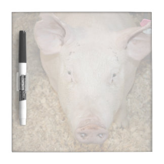 Pink pig with ear tag cute piggie picture dry erase board