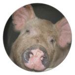 Pink Piglet Dinner Plates