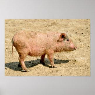 Pink piglet poster