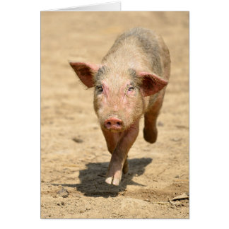 Pink piglet running front card