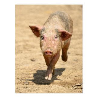 Pink piglet running front postcard