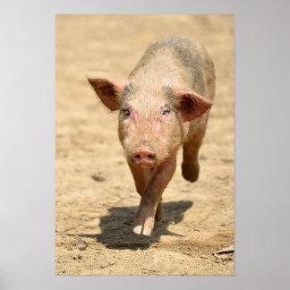 Pink piglet running front poster