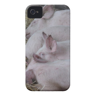Pink piglets lying down on straw iPhone 4 Case-Mate case