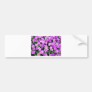 pink-pillow bumper sticker