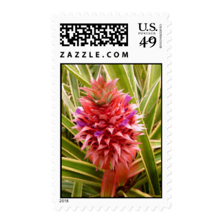Pink Pineapple Postage Stamps