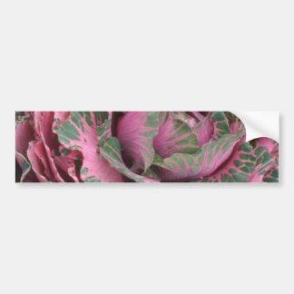 Pink Pink Cabbage flowers Bumper Sticker