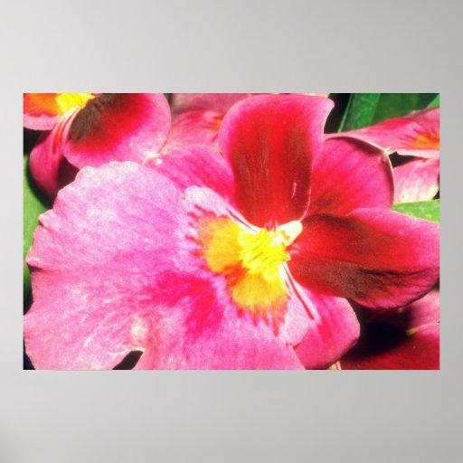 Pink Pink joy flowers Print
