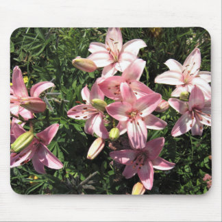 Pink, Pink White Asiatic Lilies Mouse Pad