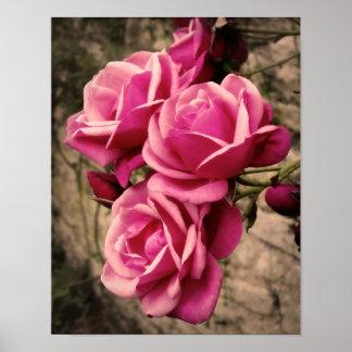Pink Pirouette Roses Print
