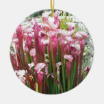 Pink Pitcher Plant ; Pink flowers Christmas Tree Ornament